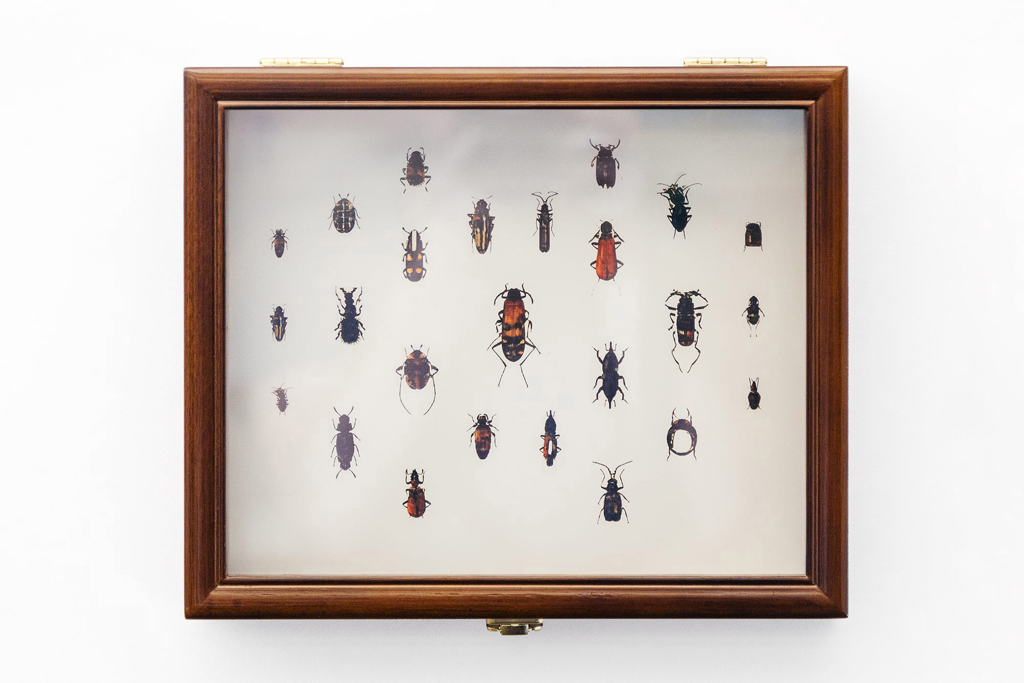a display box with a print of beetles, generated by an artificial intelligence (machine learning) algorith,